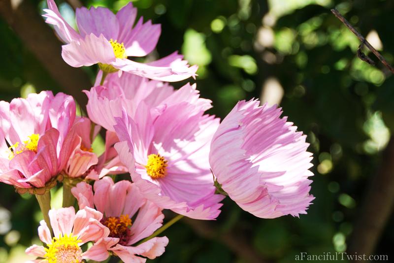 Studio blossoms 5