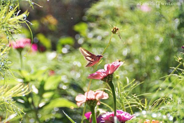 Butterfly summer 8