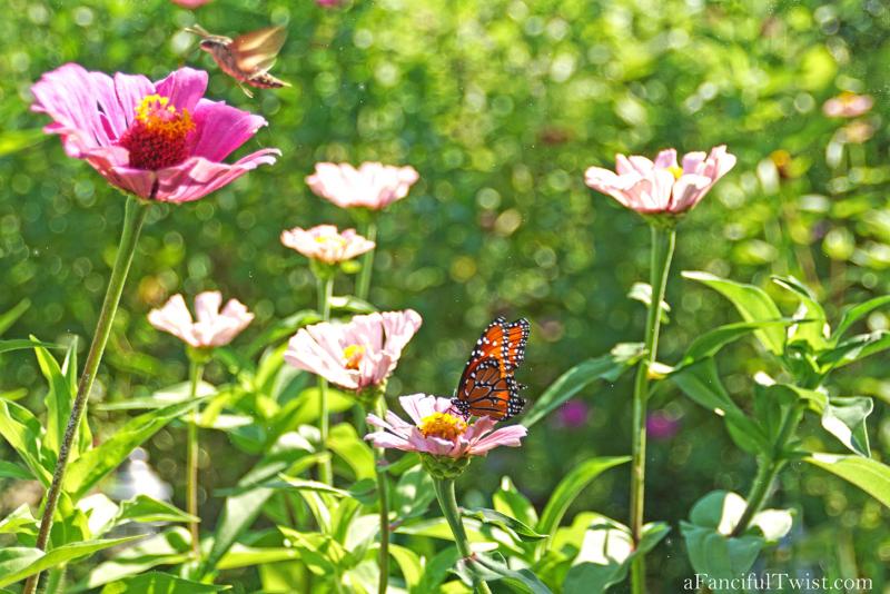 Butterfly summer 17