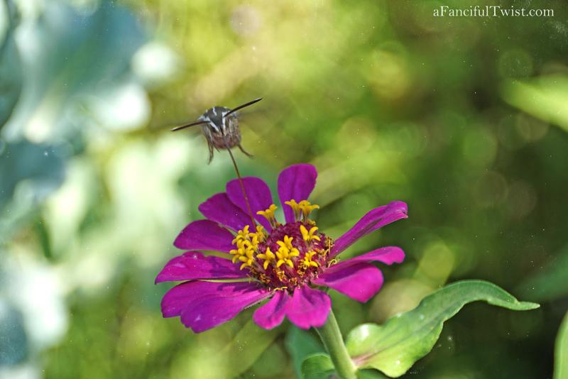 Butterfly summer 13