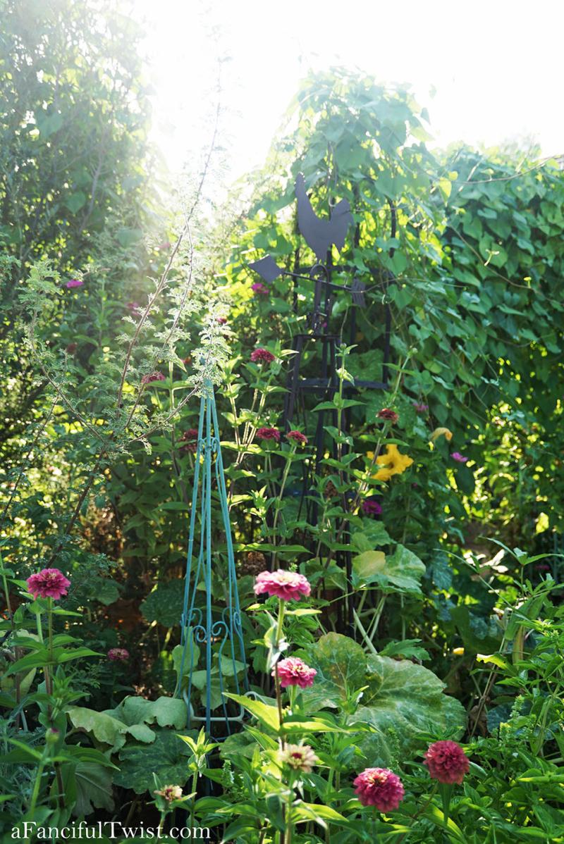 Cottage garden days 19
