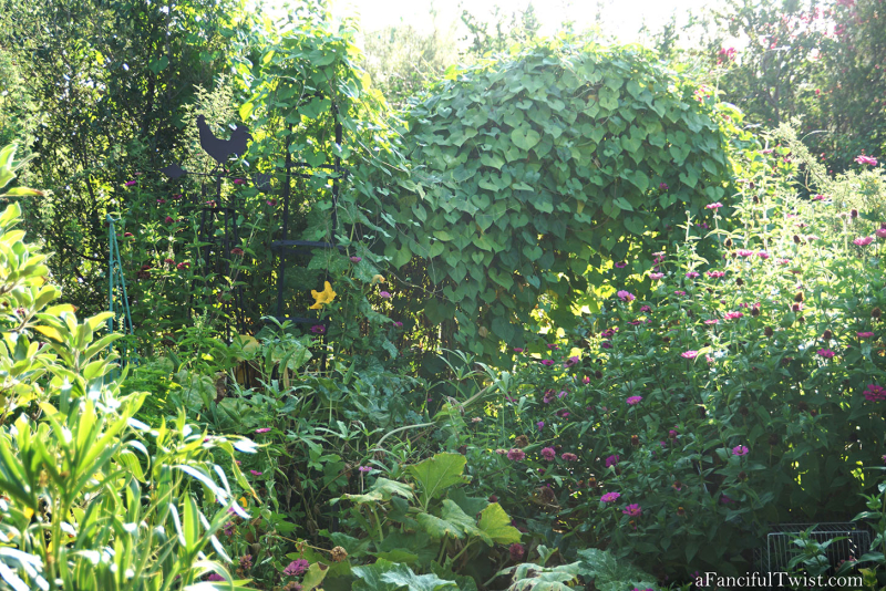 Cottage garden days 12
