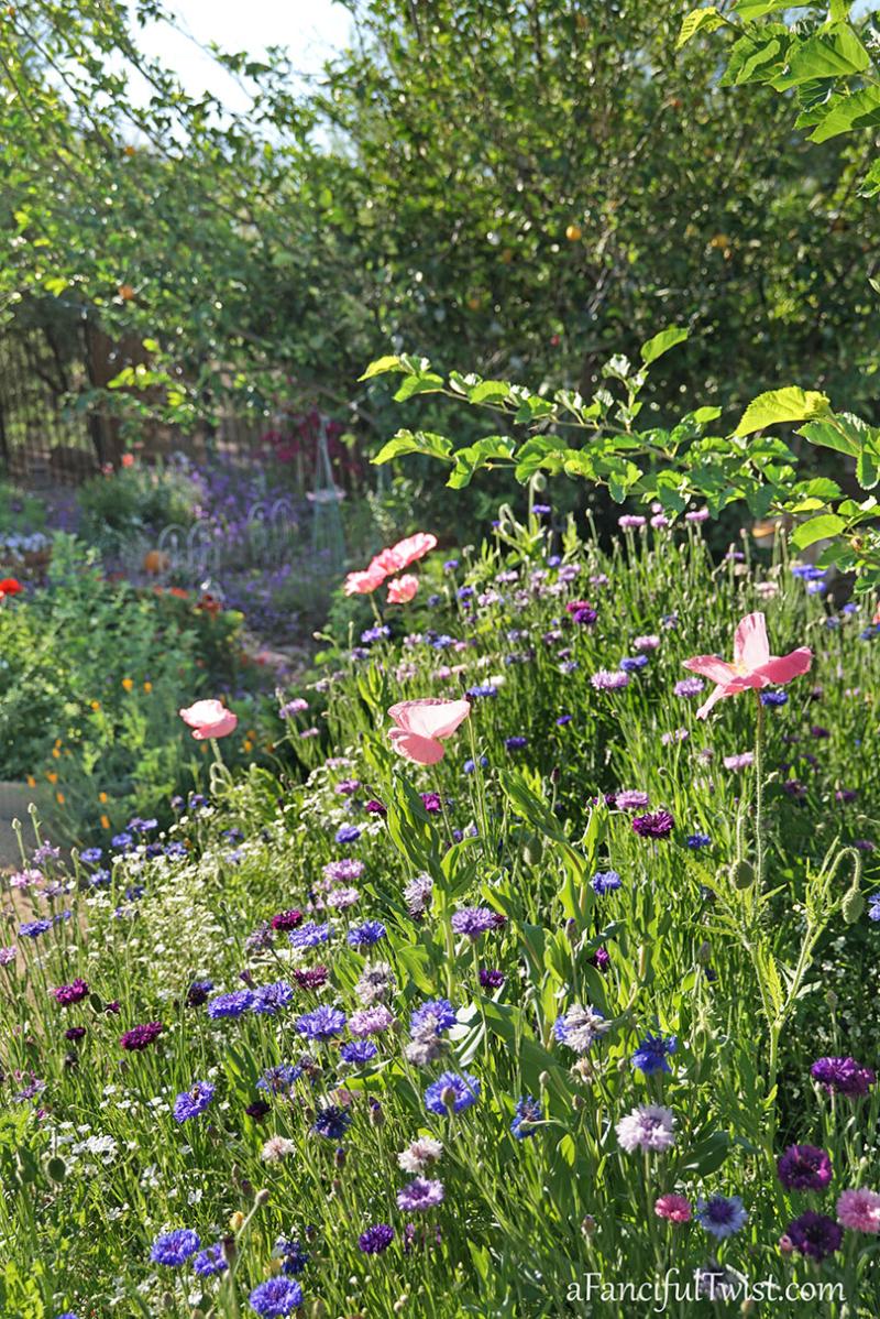 Secret garden 29