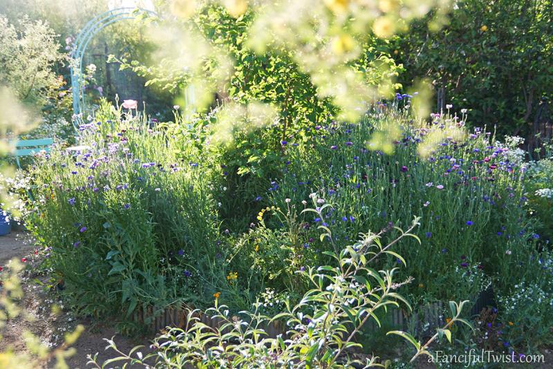 Secret garden 25