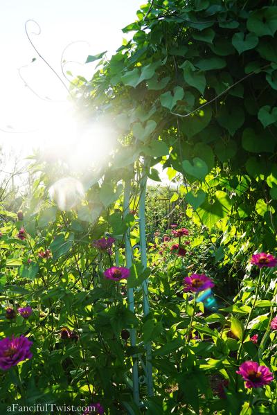 Thumbelina garden 11