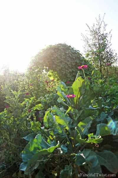 Thumbelina garden 9