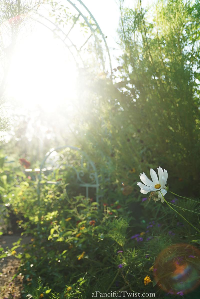 Thumbelina garden 6