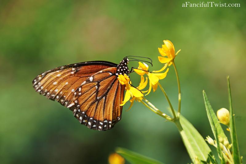 Butterfly garden 7