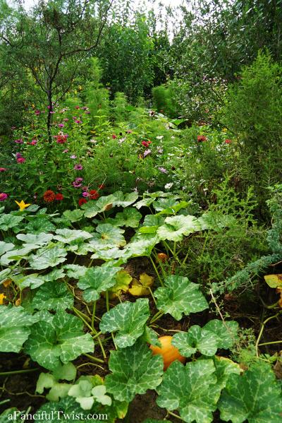 Studio and garden 15
