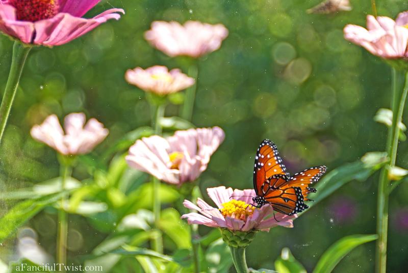 Butterfly summer 18