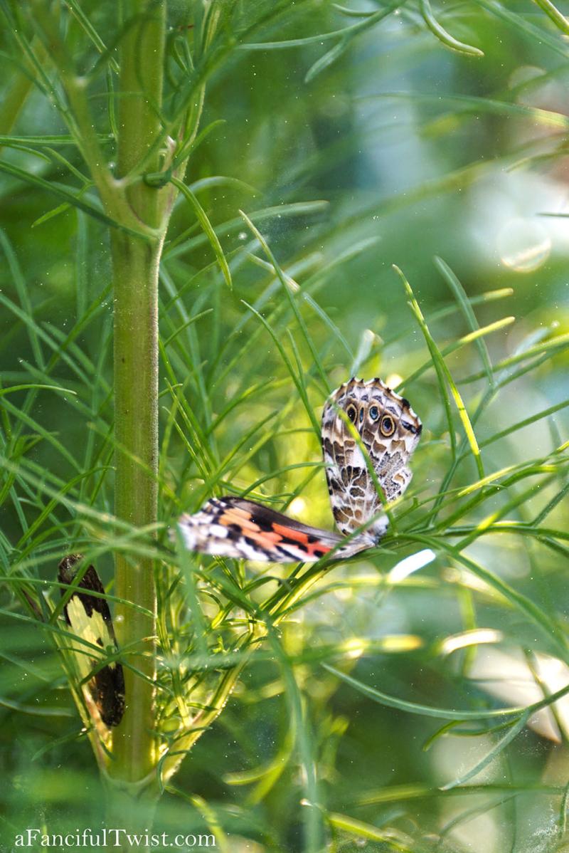 Butterfly summer 28