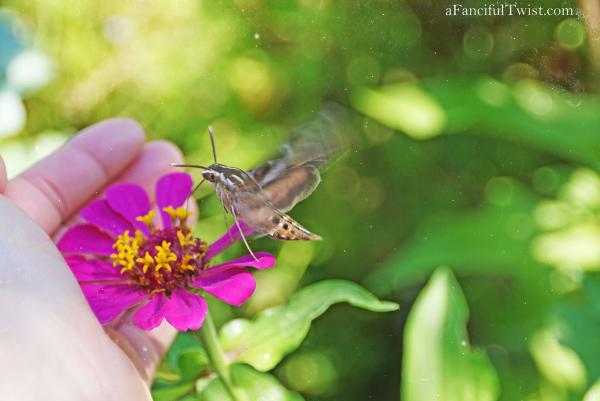 Butterfly summer 23