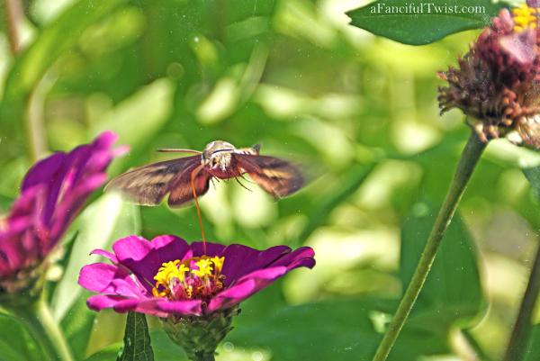 Butterfly summer 16