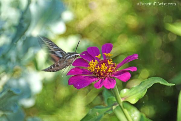 Butterfly summer 12