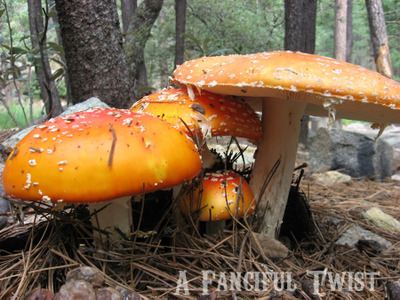 A_fanciful_twist_fungi_forest