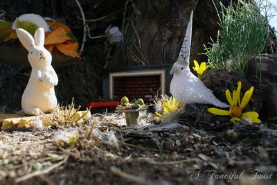 Hidden_rabbitwood_closeup_teatime