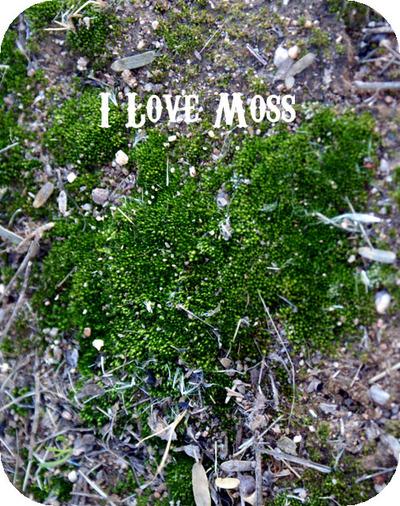 I_love_moss
