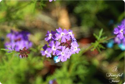Garden_35